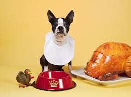 can dogs eat turkey thanksgiving faqs fetch pet care