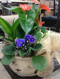 mothers day plants make a s day dish garden garden club