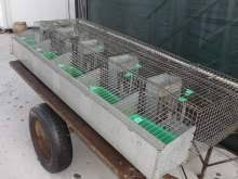 gabbie per conigli nani usate gabbie per conigli accessori per animali kijiji annunci di ebay