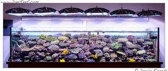 vasche acquario acquari fotografati archives danireef portale dedicato all
