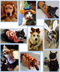 Pet Halloween Costumes Pet Halloween Costume Photo Contest Sacramento Animal Hospital
