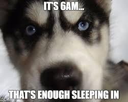 Funny Husky Memes - 8 funny siberian husky memes what every dog deserves