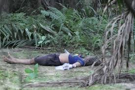 Minyak Kelapa Sawit Terkini mayat wanita ditemui di ladang kelapa sawit di mambang di awan