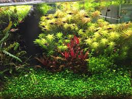 How To Aquascape A Planted Tank Freshwater Planted Tanks Something Completely Different News