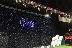 australian shepherd crufts 2015 crufts 2015 seaside shelties