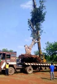 don u0027t cut trees just move them instead this hyderabad man shows