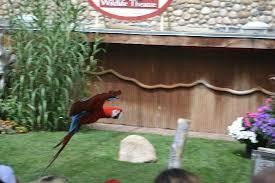 Backyard Birds Utah Bird Show Picture Of Utah U0027s Hogle Zoo Salt Lake City Tripadvisor