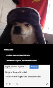 Meme Translation - russian cat translation comrade doggo know your meme