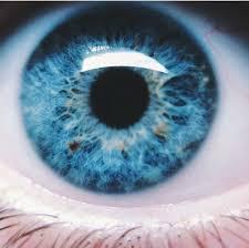 25 trending bright blue eyes ideas on pinterest beautiful eyes