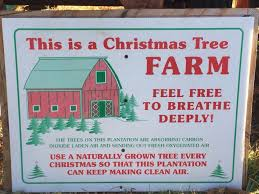 this is how to pick and cut your own christmas tree business insider