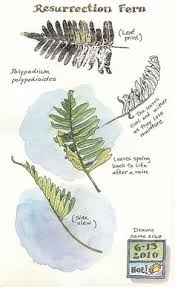 lovely article about nature journaling with pics and links