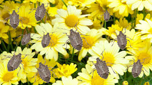 how to get rid of stink bugs southern living