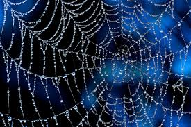 Blau Schwarz Muster Spider Web 4k Ultra Hd Wallpaper And Hintergrund 4603x3067 Id