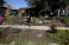 california native plants for the garden this drought friendly yard is a tropical oasis u2014 in the middle of