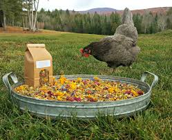 herbs for hens coop confetti chicken nest box herbal
