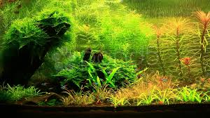 aquarium design natural aquarium video 2 video 2356260