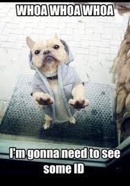 Meme French - 9 funniest french bulldog memes what the frenchie