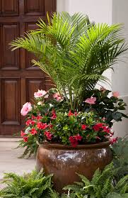 Plant Combination Ideas For Container Gardens - best 25 majesty palm ideas on pinterest outdoor palm plants
