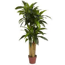 4 u0027 corn stalk dracaena silk plant real touch silk plants and
