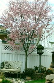 Flowers In Hanover Pa - j c pryor landscaping mulch trees and shrubs hanover pa