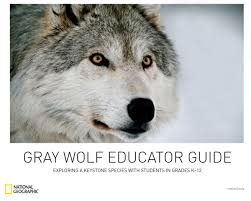 campaign to educate kids about wolves a success living with wolves