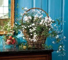 Indoor Flower Plants Best 25 Indoor Flowering Plants Ideas On Pinterest Low Light