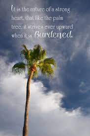 20 palm tree quotes sayings images photos wall4k