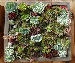 indoor vertical succulent garden write teens