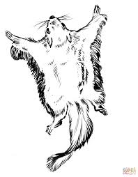 flying squirrel coloring page free printable coloring pages
