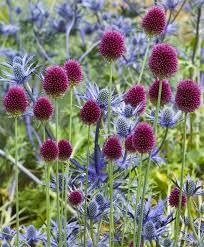 best 25 thistle plant ideas on plants near me winter