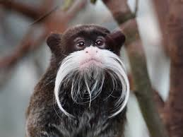 Baby Monkey Meme - i see your mustache bird and raise you a mustache monkey meme guy