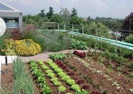 terrace gardening terrace vegetable garden 6 mini balcony garden web