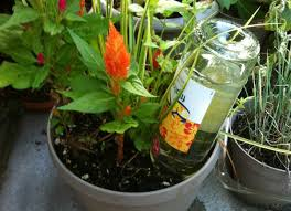 self watering diy self watering plant with wine bottle 21 home hacks that are