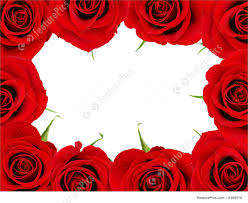 red rose frame picture