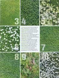 alternatives to grass in backyard alternatives to grass in backyard outdoor goods