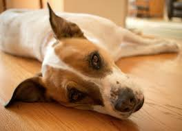 Window Seats For Dogs - why is my dog throwing up dog vomiting causes u0026 more petmd petmd