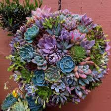 93 best succulent images on pinterest gardening succulents