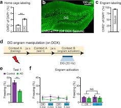 memory retrieval by activating engram cells in mouse models of