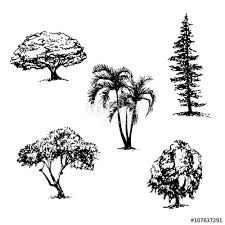 drawing collection of 5 elements of different types of trees