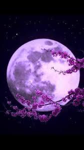 613 best purple images on pinterest purple stuff the color