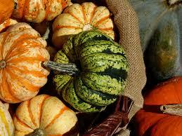 free photo thanksgiving pumpkins vegetables free image on