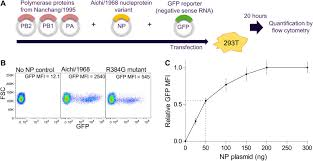 Np Full Form Stability Mediated Epistasis Constrains The Evolution Of An