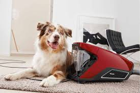 australian shepherd ipod 5 case miele blizzard cx1 vacuum cleaner cat u0026 dog ireland