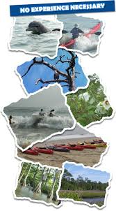 Virginia Beach World Easy Guides by Kayak Nature Tours Virginia Beach Sea Kayaking Va Dolphin