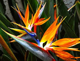 spectacular gingers u0026 other amazing exotic plants rare plants afficher l u0027image d u0027origine цветя pinterest exotic plants