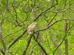 Maryland wildlife tours images Deep creek lake family activities and eco tours kayaking tours jpg