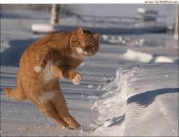 To Kill A Mockingbird Cat Meme - dodge cat know your meme