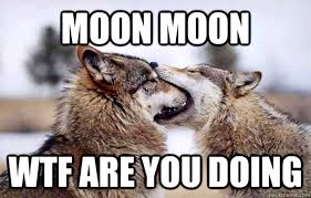 Moon Moon Memes - 10 of the funniest memes featuring moon moon the awkward wolf