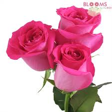 hot pink roses affordable roses for weddings and events budget friendly beauty