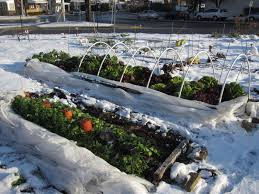 gardening in the winter northwest gardening winter garden ideas
